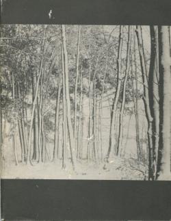 Ubris Herbst 1968, 1968